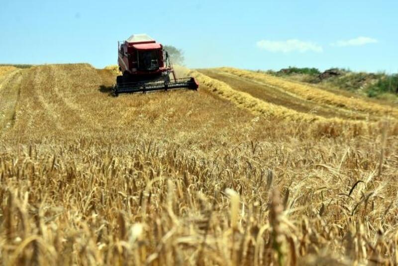 Edirne'de verimi yüzde 30 artan arpa çiftçinin yüzünü güldürdü