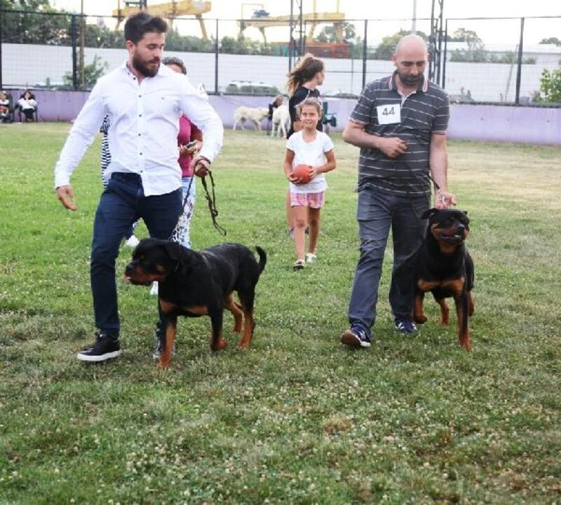 Farklı köpek ırkları Bursa'da yarıştı