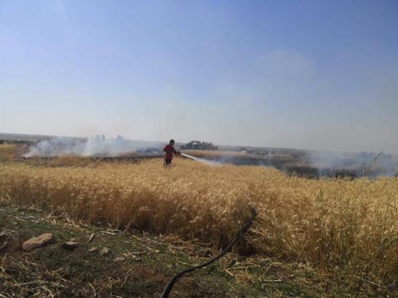 Ceylanpınar'da 40 dönüm buğday tarlası yandı