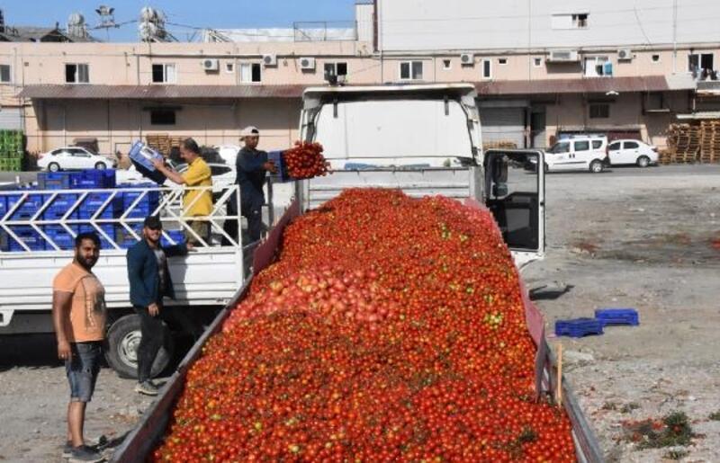 Demre'de salçalık domates krizi çözüldü