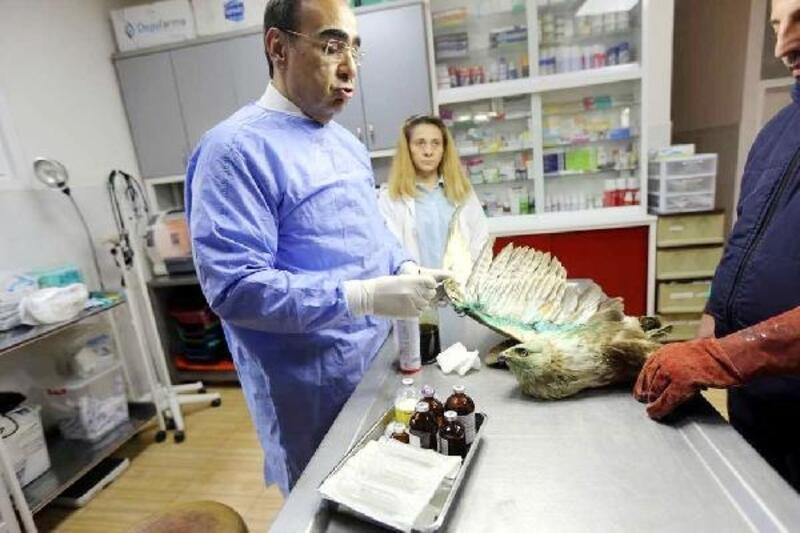 Gaziantep'te, 'Hayvan hastanesi' kuruldu
