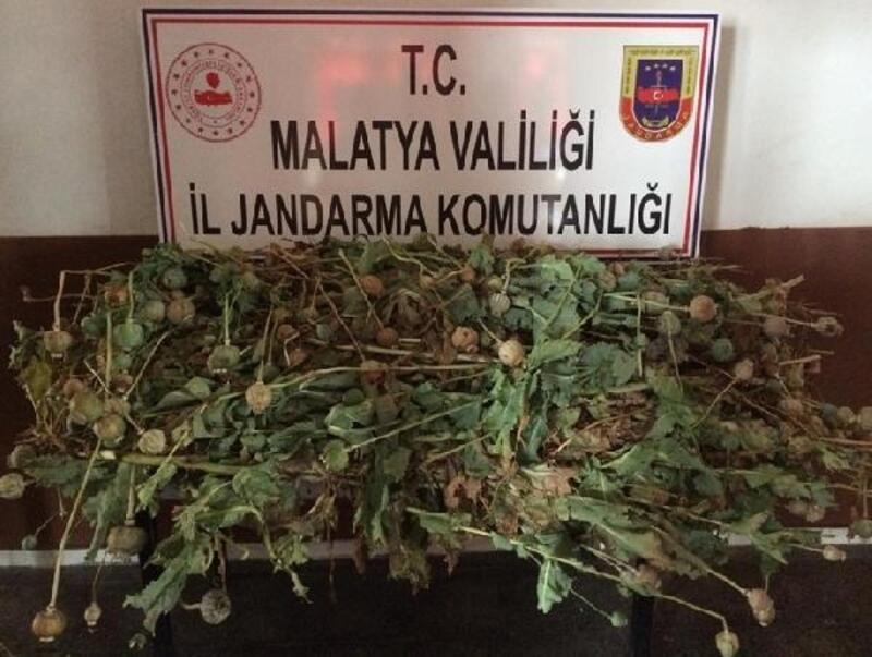 Malatya'da, kenevire gözaltı