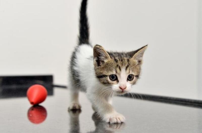 'İstanbul' adı verilen kediye yuva arıyorlar