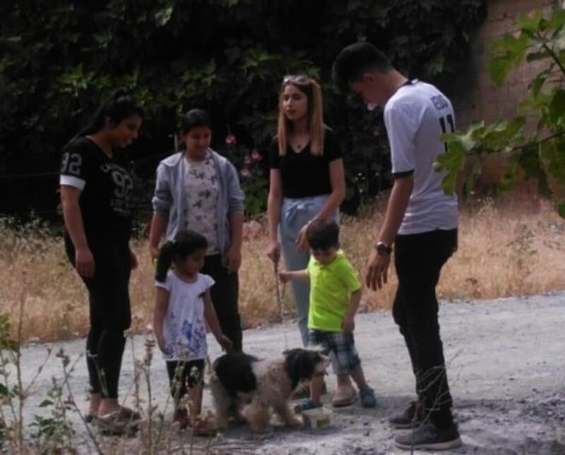 Sokak hayvanları için su kabı