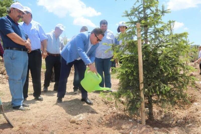 Odunpazarı'nda Ahşap Festivali yeni orman kazandırdı
