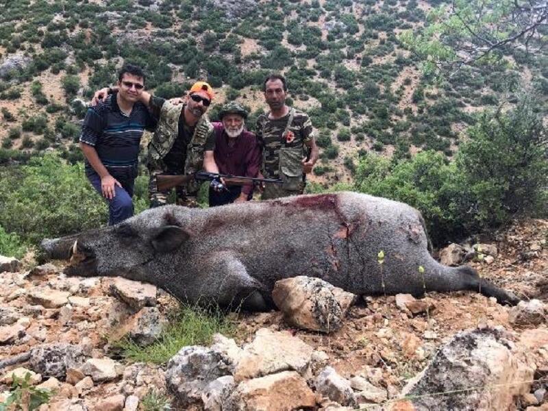 Yaban domuzları öldürüldü