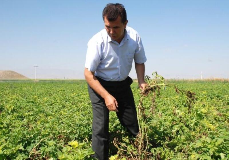NiğdeZiraat Odası'ndan patates üreticilerine uyarı