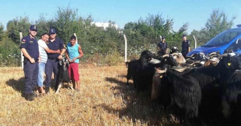 Çobanın kaybettiği 80 küçükbaş, drone ile bulundu