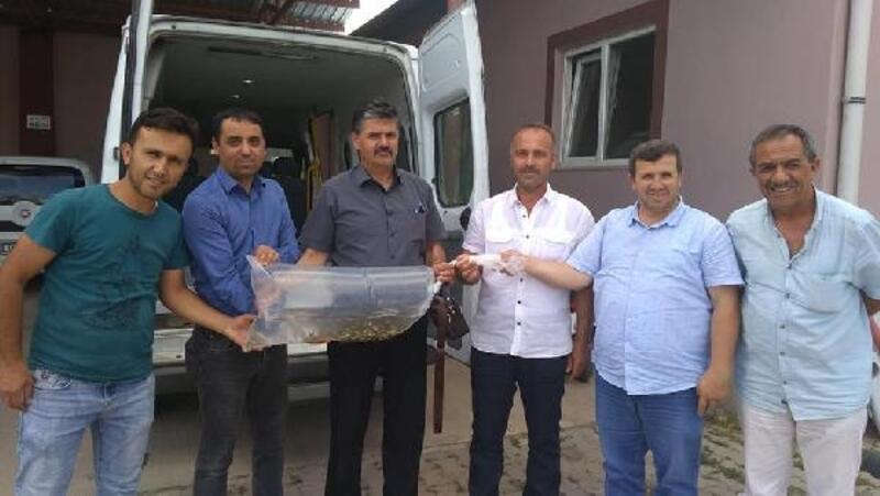 Tokat'ta göletlere 70 bin sazan yavrusu bırakıldı