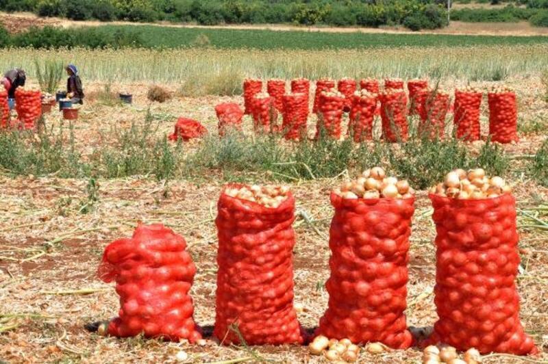 Karacabey'de soğan üreticisi memnun