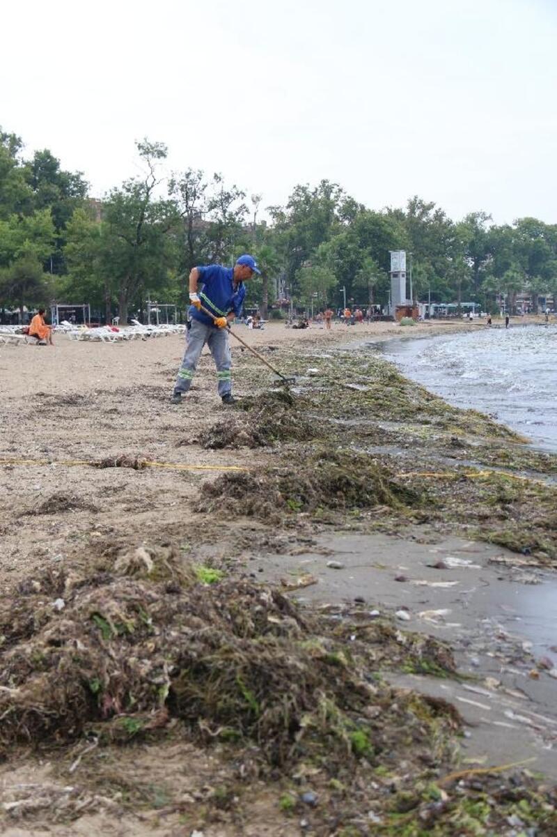 Yalova'da sahillerde yosunlar temizleniyor