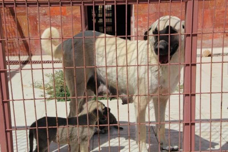 Elazığ'daki hayvanların umudu hastane