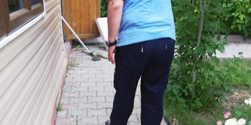 Ankara'da yılan paniği