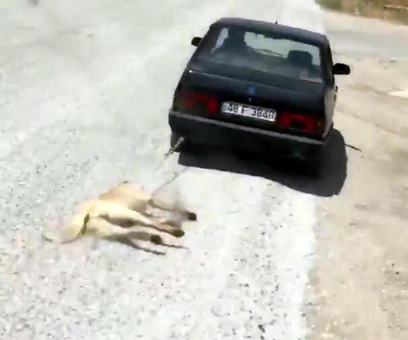Köpeği otomobilin arkasında sürükleyen o sürücüye kamu davası