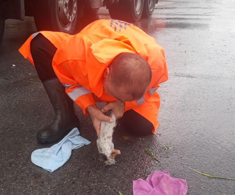 Yavru kediyi suni teneffüs hayata döndürdü