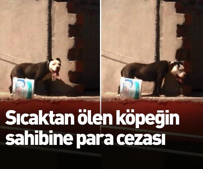 Son dakika: Sıcaktan ölen köpeğin sahibine para cezası