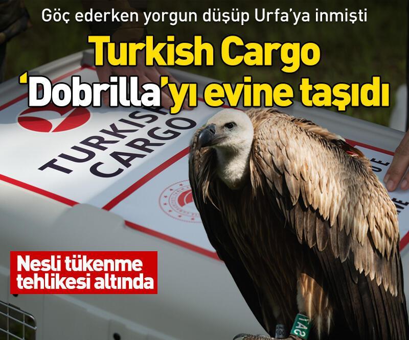 Son dakika: Turkish Cargo 'Dobrilla'yı evine taşıdı
