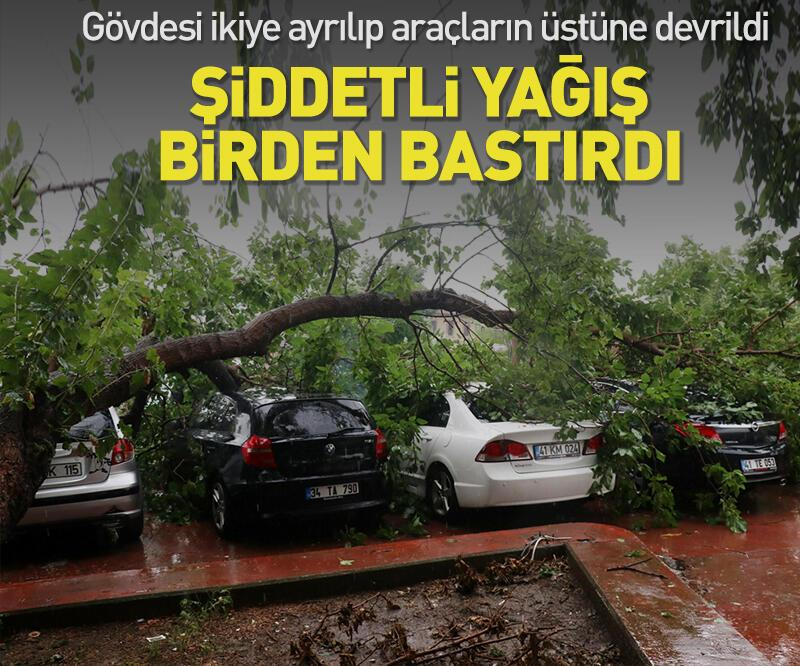 Son dakika: Kocaeli'de şiddetli sağanak! Ağaç araçların üzerine devrildi
